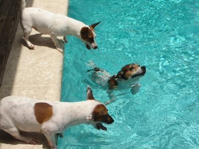 They love the Pool. Senko can go all the way to the bottom to get his ball.