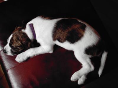gizzie a sleep