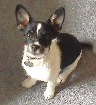 Quinto our cutie :)