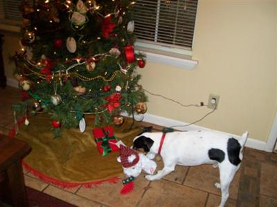 Bullit and his Christmas toy