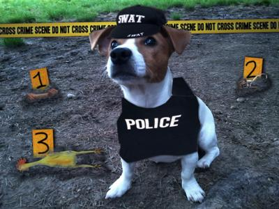 Funny Crime Scene Dog Picture