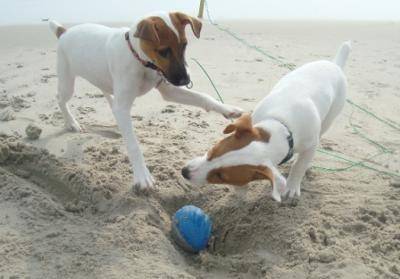 Kota and Gracie playing on the beach