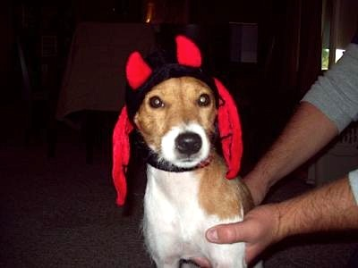 Gappie the Devil-Dog!