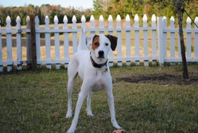 Our Bailey Boy!