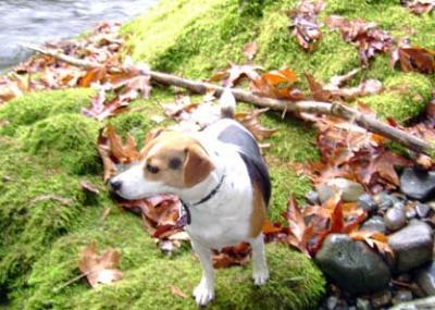 Magnus In Autumn