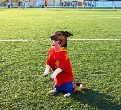 Jack Mascot of 2010 World Cup Champions Spain