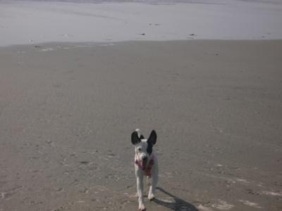 jaclyn at Dog Beach