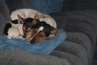 Jay Jay & Lil' Bit taking a nap!