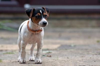 Pip - small dog, big personality.