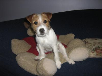 Fanny at Five Months Old