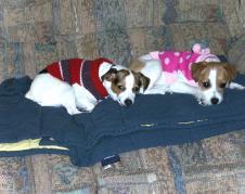 Cuddle Buddies!