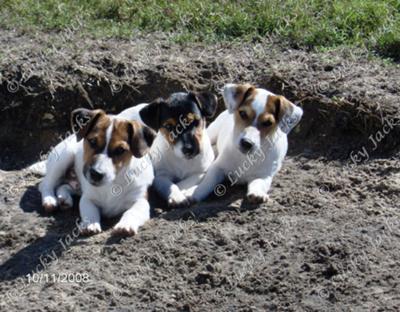 2008 pups