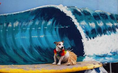 One of Machos last pictures Surfer Dog