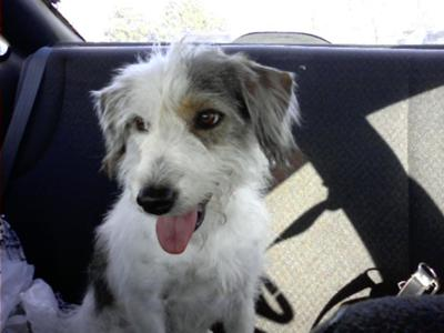 On My Way to My Forever Home