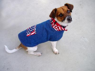 Americana Jack Russell, Maximo
