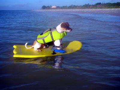 Maximo the Surfer !!