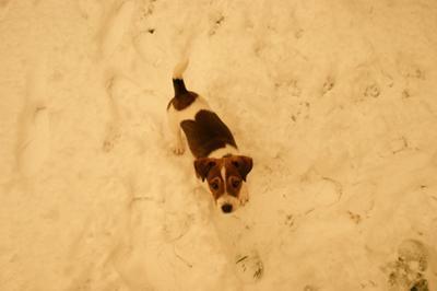 Milo in the Decemeber Snow 2009