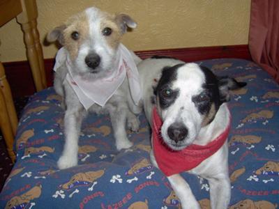 Bandana Dogs