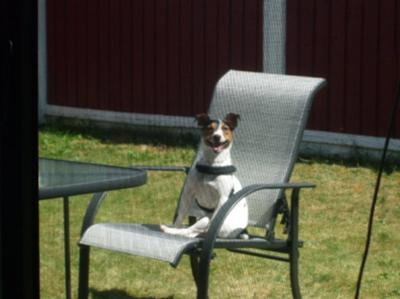 Broady Taking in the Sunshine :)