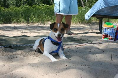 Rocky relaxing on the beach in Erie, PA