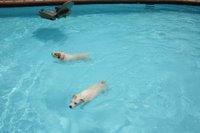 They Love To swim al day!