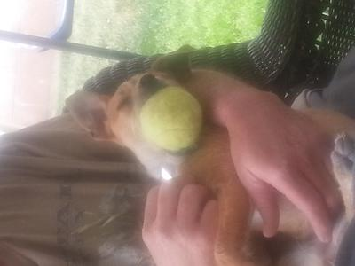 awe i found my ball!