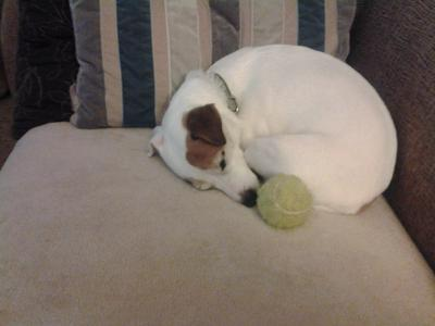 jade loves her ball