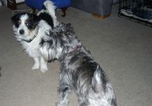 Lulu & Zoe (Lulu JRT)