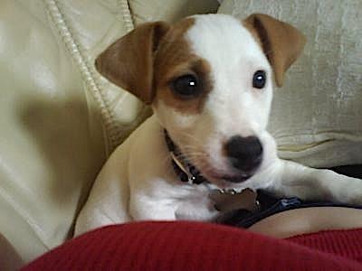 Meet Mylo