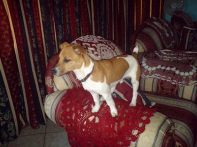 Bailey the Prince