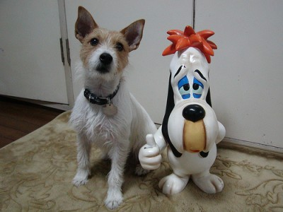 Jack Russell Terrier Characteristics