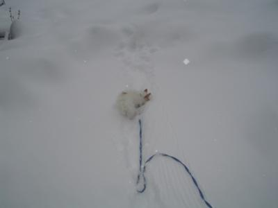 Reddy Freddy the Jack Russell Snow Dog