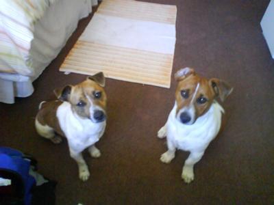 Ozzie and Rocky