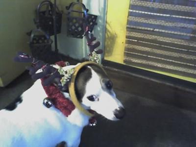 Rocky Loves Christmas