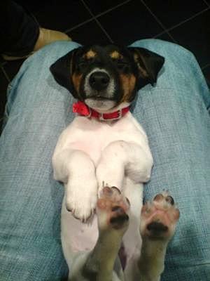 Roxy as a Pup Sleeping