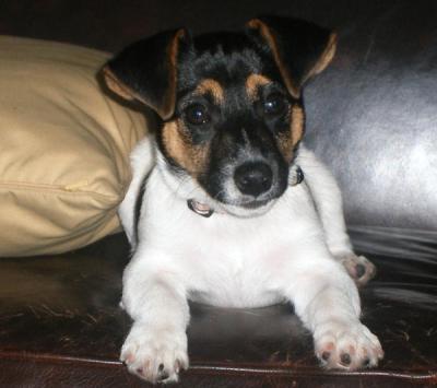 Cutie Rudy!