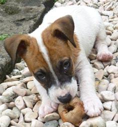 Puppy Love at 6 weeks