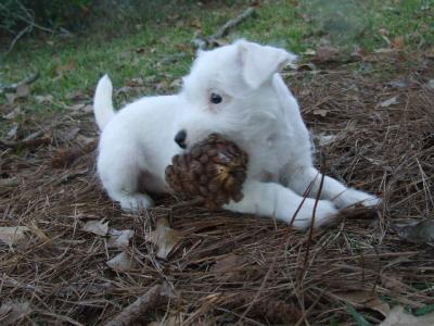 Emmy Lou and her 'prize pinecone!