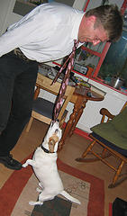 characteristics of jack russell terrier