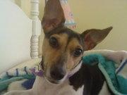 Trixie!!!