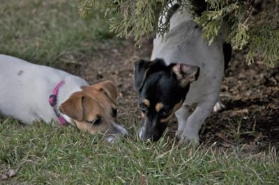 Tilly and Mayia