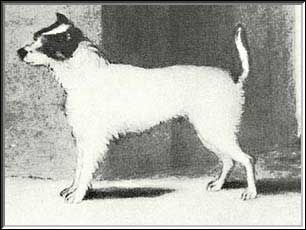 Jack Russell Terrier History...A Unique Origin
