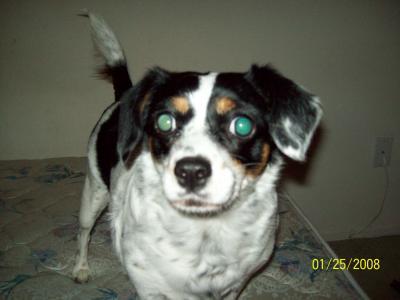 my gracie dog