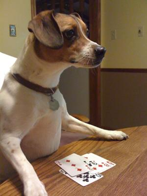 Wilson's Poker Face