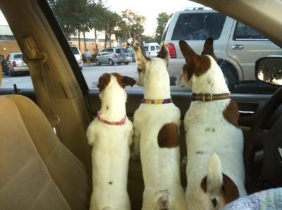 Daisy, Senko, Smitty