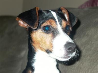 Chutney (female) 6 months old