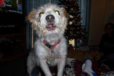 sanchez......singing@christmas time