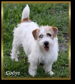 Codye - Breeding for thick dense coats with heavier texture