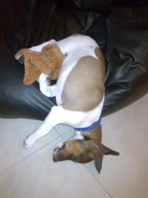 To Bed with His Teddy!