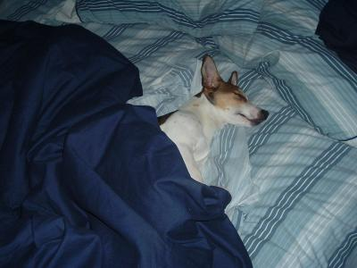 Cliffy under the covers